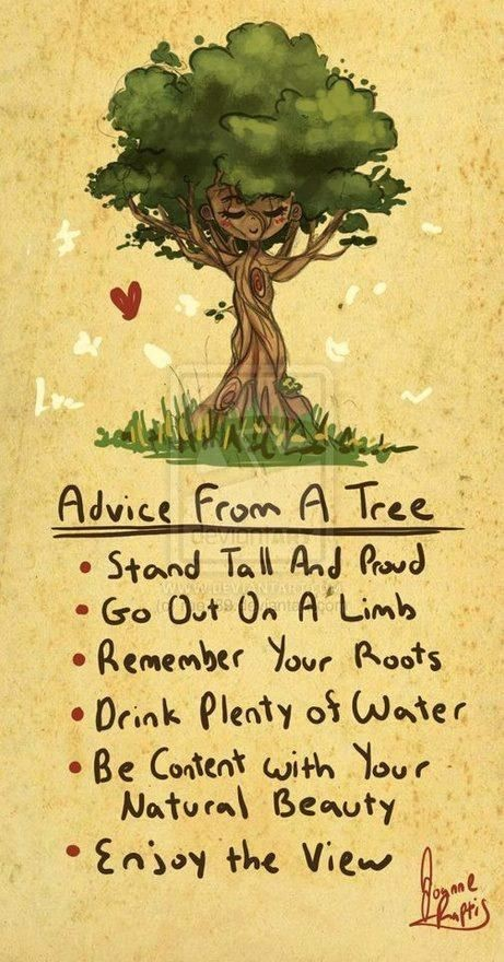 Advice from a tree graphic